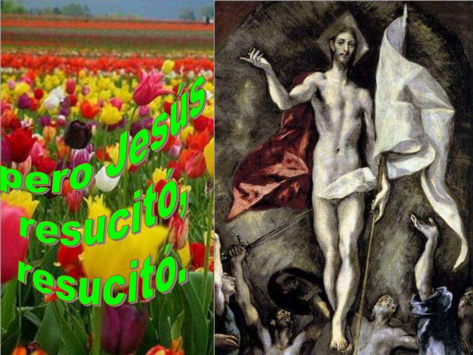 En la cruz le vimos muerto, fracasado y destruido;