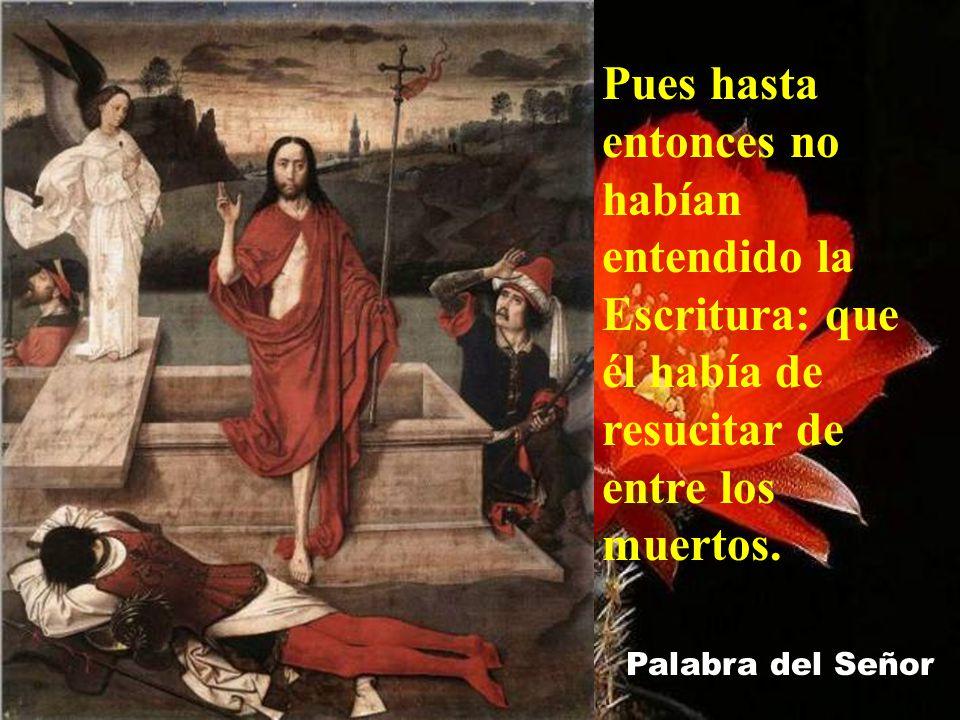 Entonces entró también el otro discípulo, el que había llegado primero al sepulcro; vio y creyó;