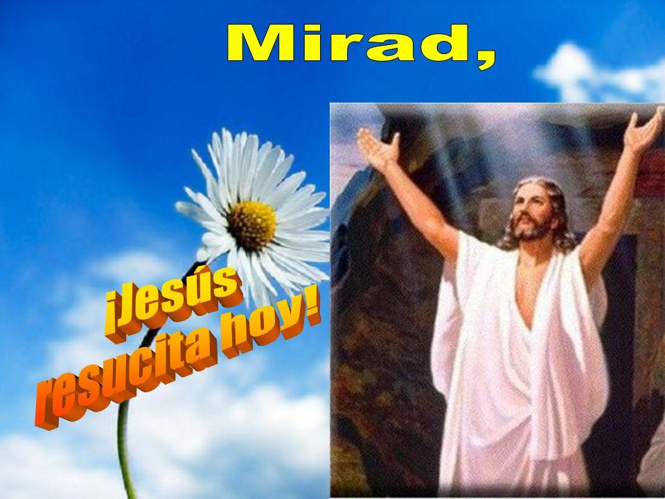 Como nos dice san Pablo: