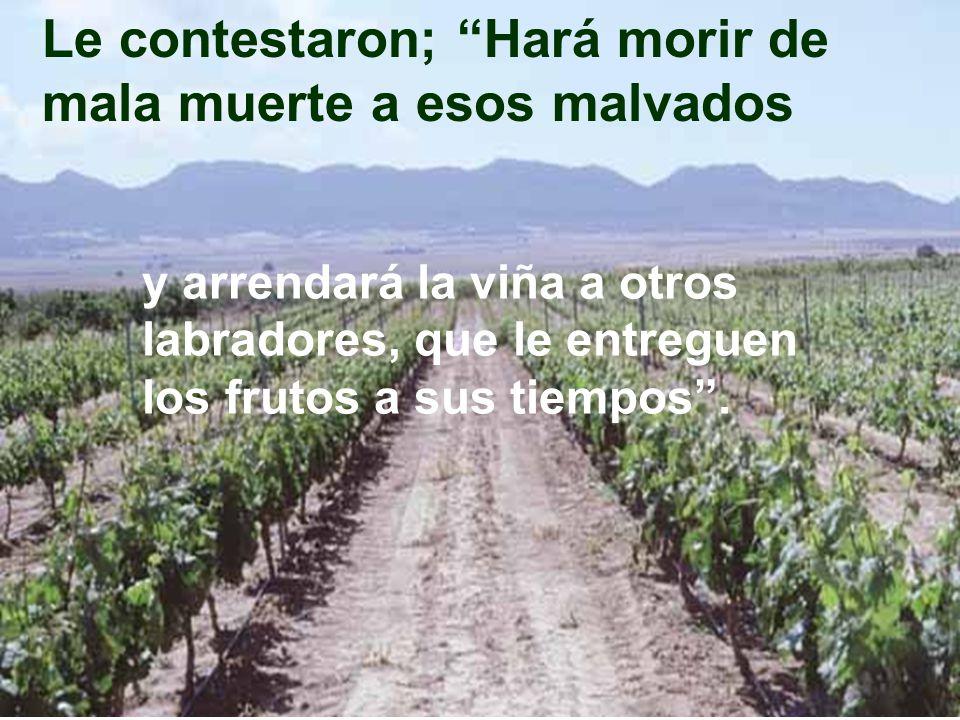 Y ahora, cuando vuelva el dueño de la viña, ¿qué hará con aquellos labradores?