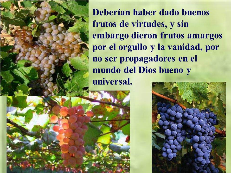 Hoy Jesús narra una pará- bola, en la que presenta el pueblo de Israel como una viña preciosa preparada por el mismo Dios.