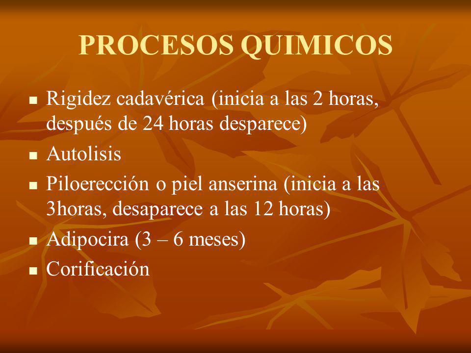 PROCESOS QUIMICOS Rigidez cadavérica (inicia a las 2 horas, después de 24 horas desparece) Autolisis Piloerección o piel anserina (inicia a las 3horas