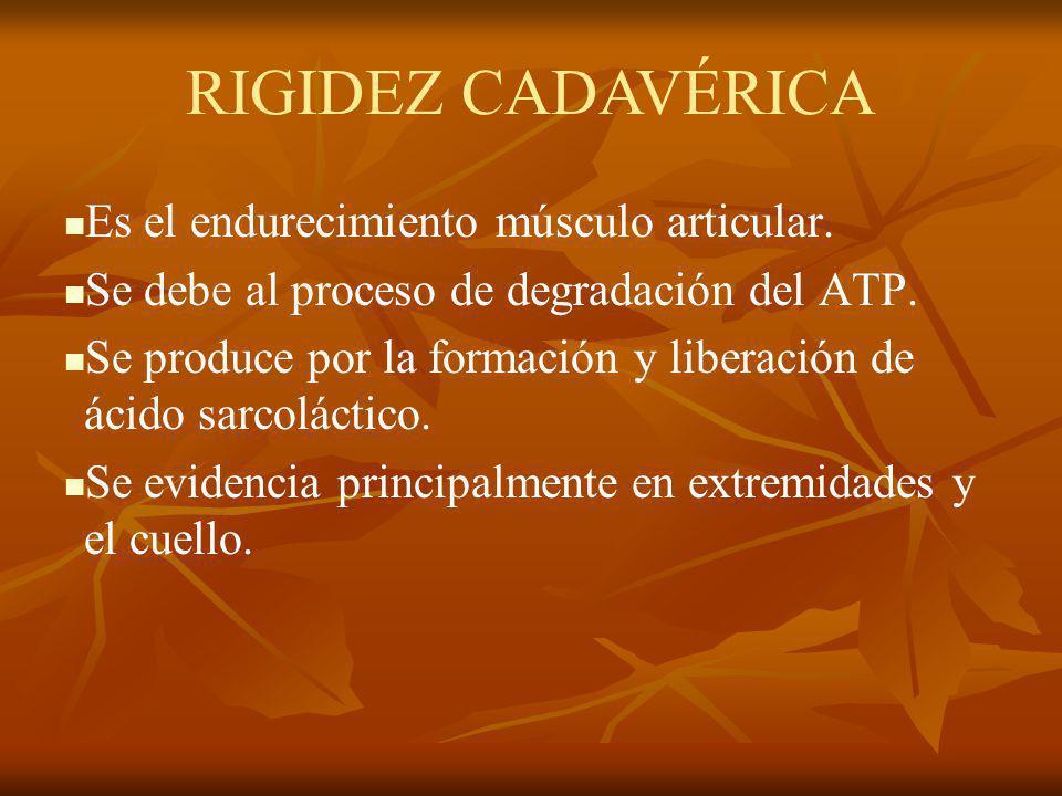 Es el endurecimiento músculo articular. Se debe al proceso de degradación del ATP. Se produce por la formación y liberación de ácido sarcoláctico. Se