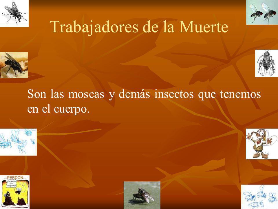 Trabajadores de la Muerte Son las moscas y demás insectos que tenemos en el cuerpo.