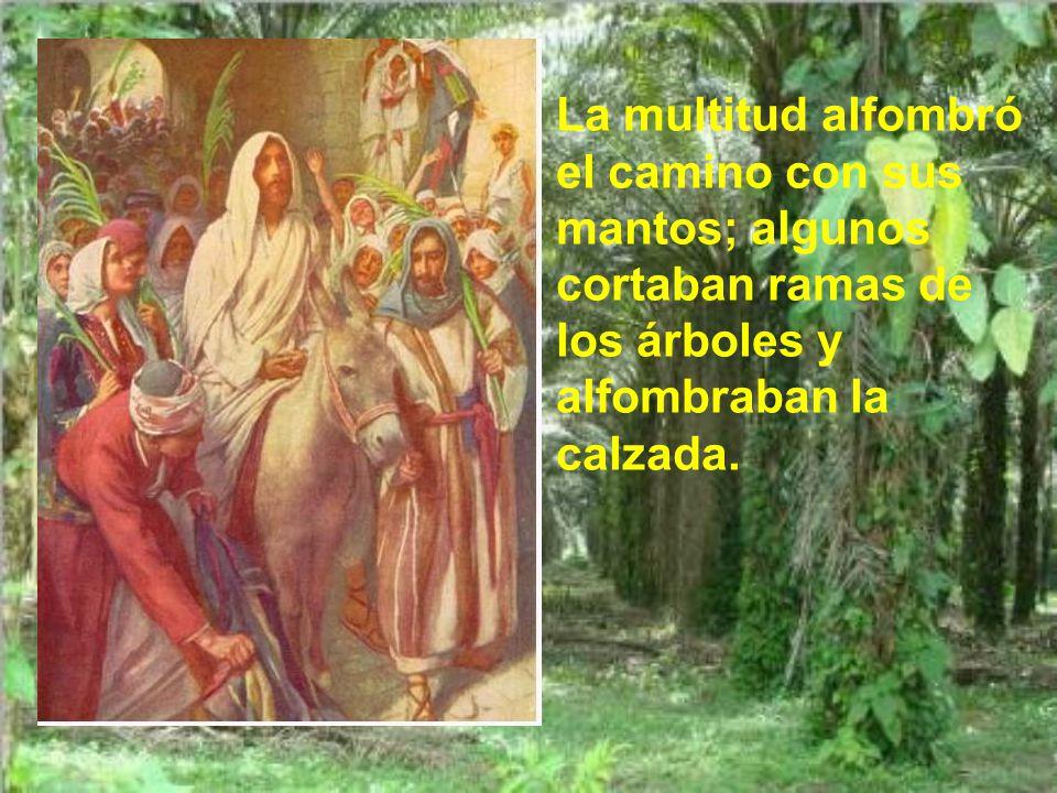 Trajeron la borrica y el pollino, echaron encima sus mantos y Jesús se montó.