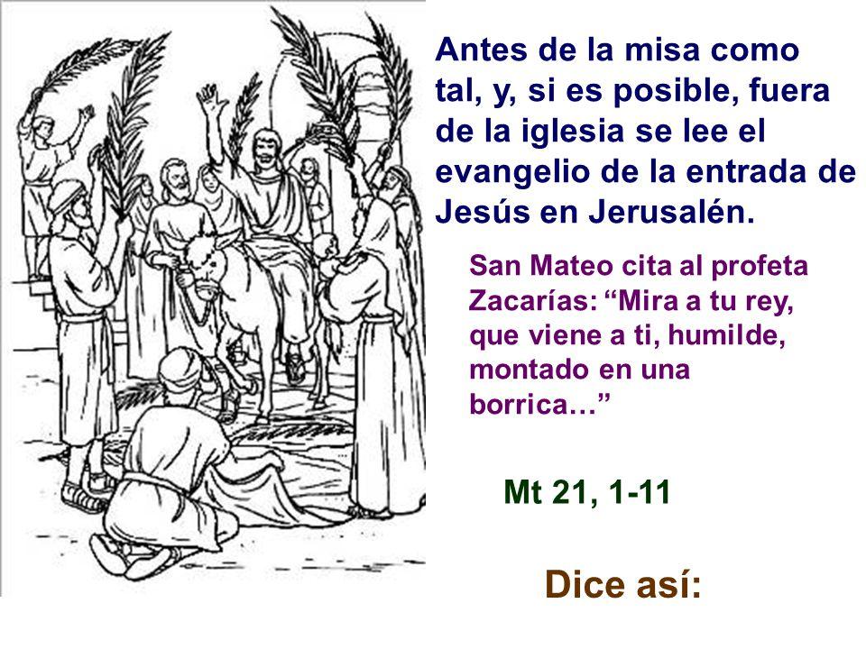 Como estamos en el ciclo A, san Mateo es el autor de las dos partes del evangelio de este día, la entrada en Jerusalén y la Pasión de Jesucristo. San