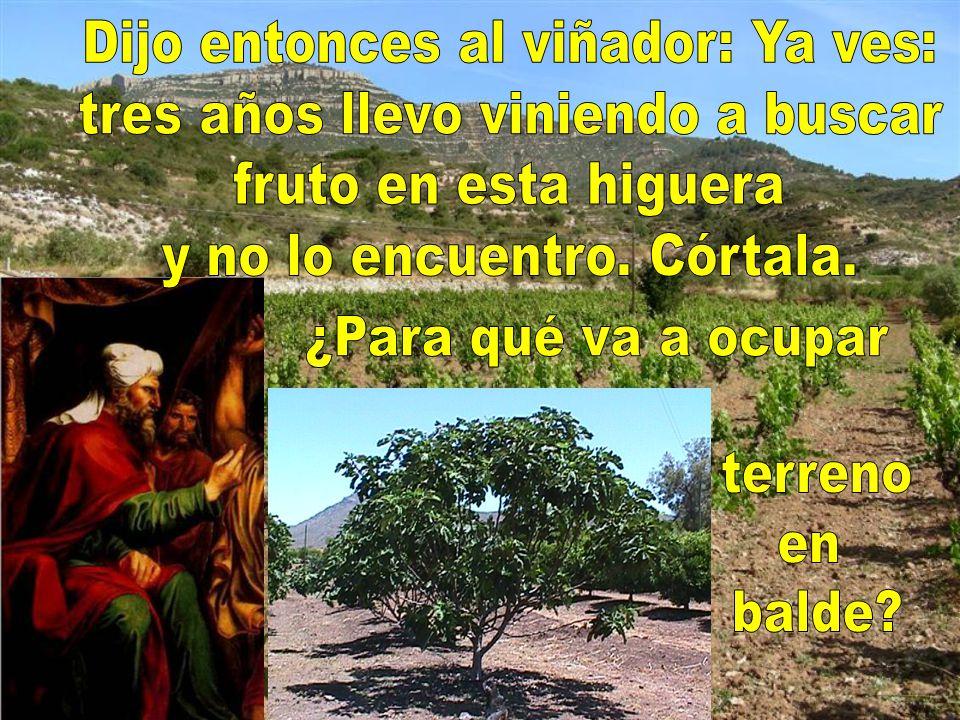Uno tenía una higuera plantada en su viña y fue a buscar fruto en ella, y no lo encontró.