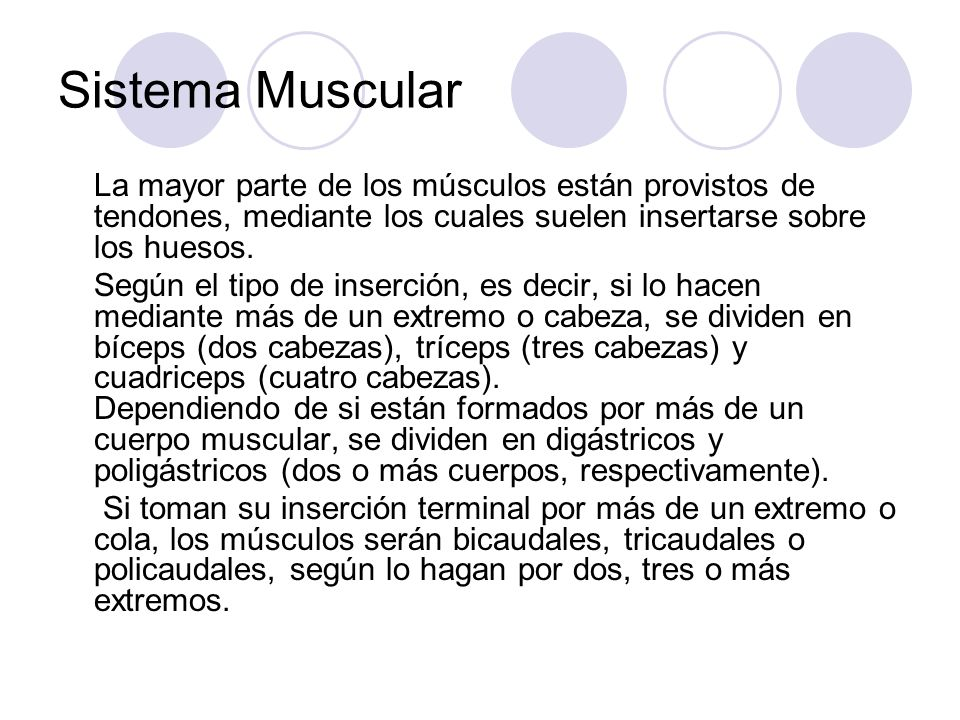 Sistema Muscular La mayor parte de los músculos están provistos de tendones, mediante los cuales suelen insertarse sobre los huesos. Según el tipo de