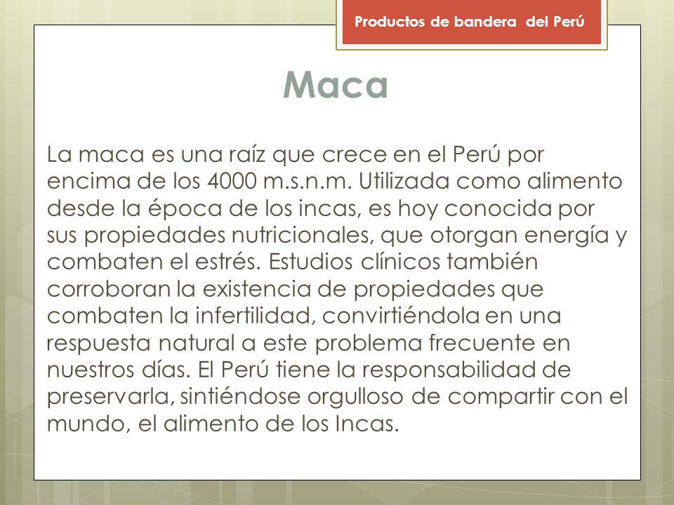 Maca La maca es una raíz que crece en el Perú por encima de los 4000 m.s.n.m.