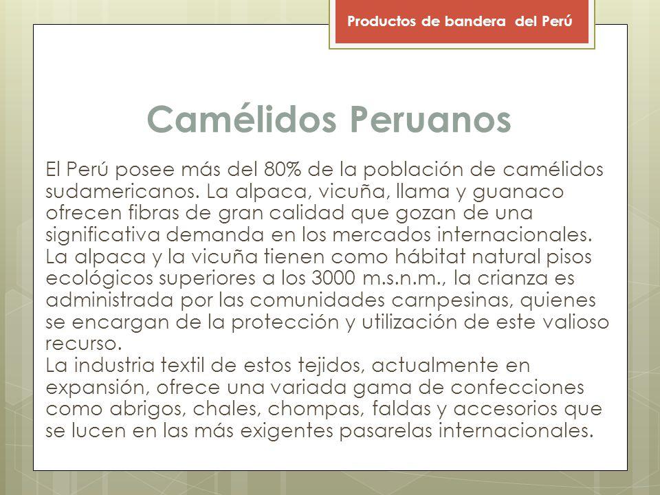 Camélidos Peruanos El Perú posee más del 80% de la población de camélidos sudamericanos.