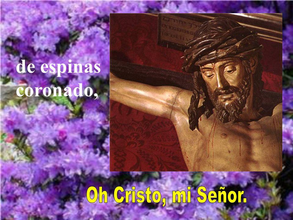 Oh Cristo ensangrentado, transido de dolor, Automático