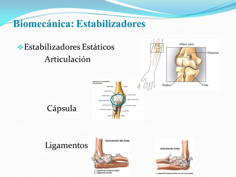 Biomecánica: Estabilizadores Estabilizadores Estáticos Articulación Cápsula Ligamentos