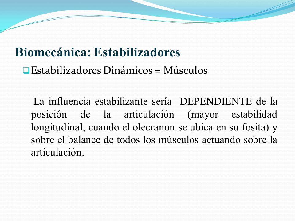 Biomecánica: Estabilizadores Estabilizadores Dinámicos = Músculos La influencia estabilizante sería DEPENDIENTE de la posición de la articulación (may