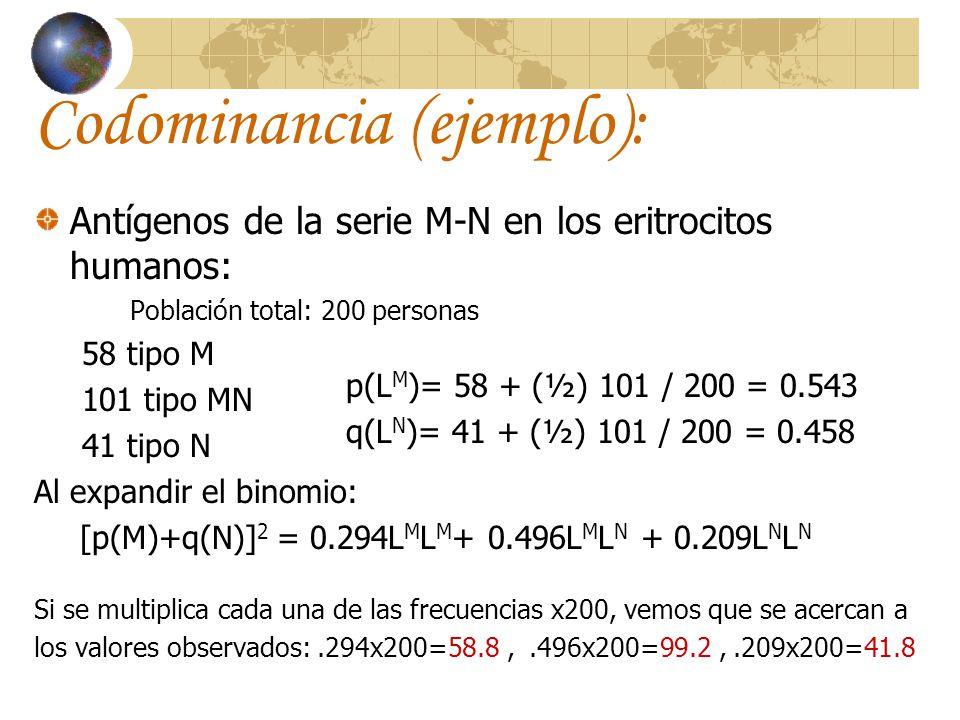 Codominancia (ejemplo): Antígenos de la serie M-N en los eritrocitos humanos: Población total: 200 personas 58 tipo M 101 tipo MN 41 tipo N Al expandi