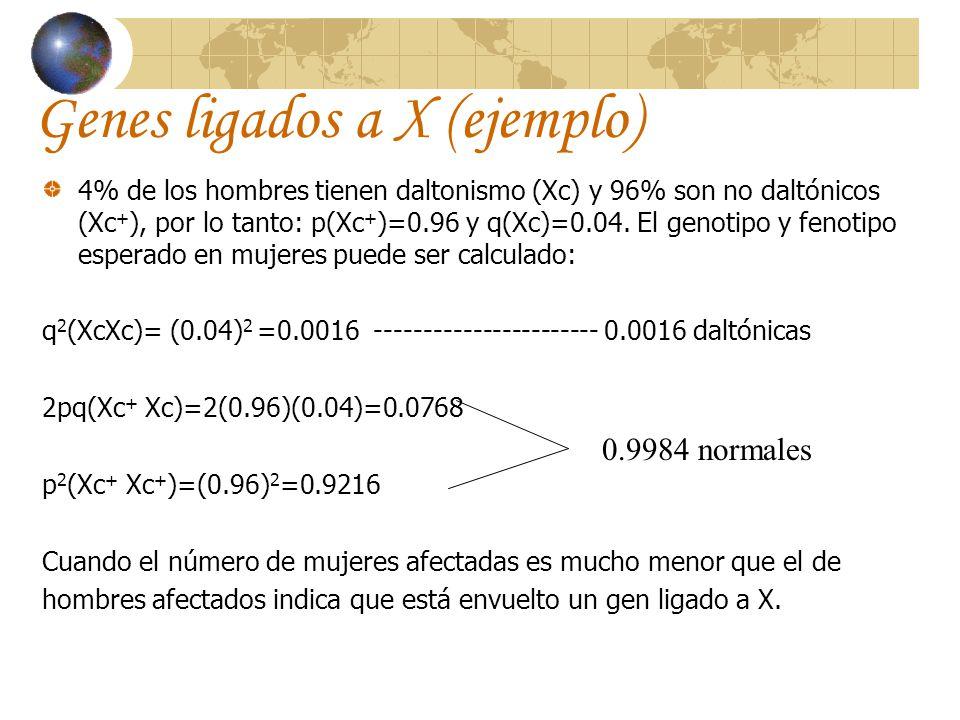 Genes ligados a X (ejemplo) 4% de los hombres tienen daltonismo (Xc) y 96% son no daltónicos (Xc + ), por lo tanto: p(Xc + )=0.96 y q(Xc)=0.04. El gen