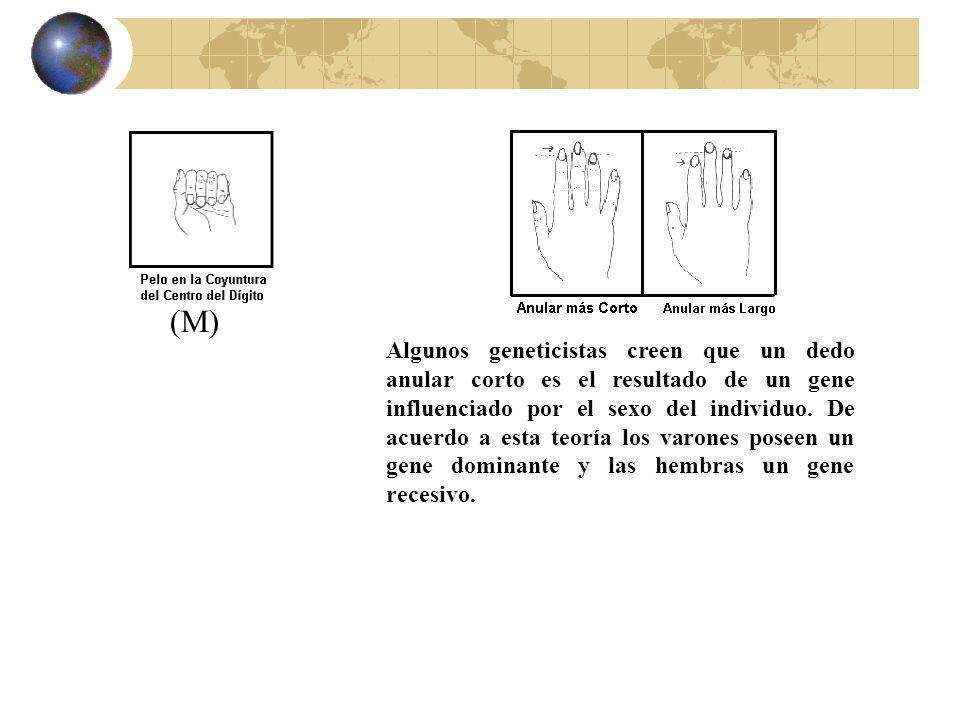 (M) Algunos geneticistas creen que un dedo anular corto es el resultado de un gene influenciado por el sexo del individuo. De acuerdo a esta teoría lo