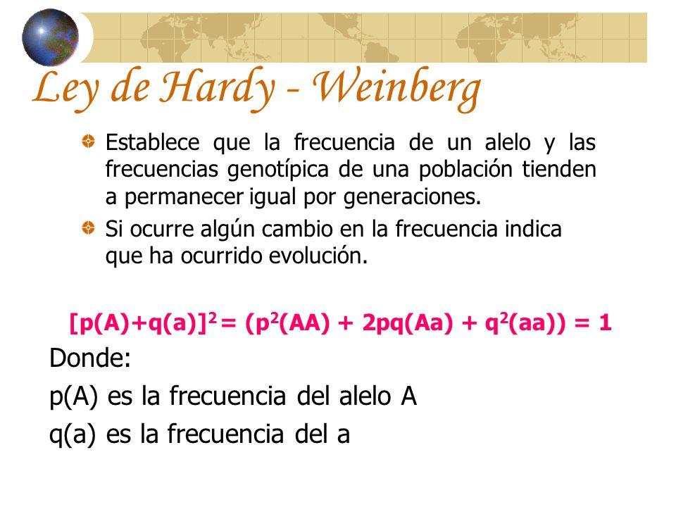 Ley de Hardy-Weinberg (cont.) Para sacar la frecuencia del alelo A p(A)= [p 2 +½(2pq)] / (p 2 + 2pq + q 2 ) Para sacar la frecuencia del alelo a q(a)= [q 2 +½(2pq)] / (p 2 + 2pq + q 2 )
