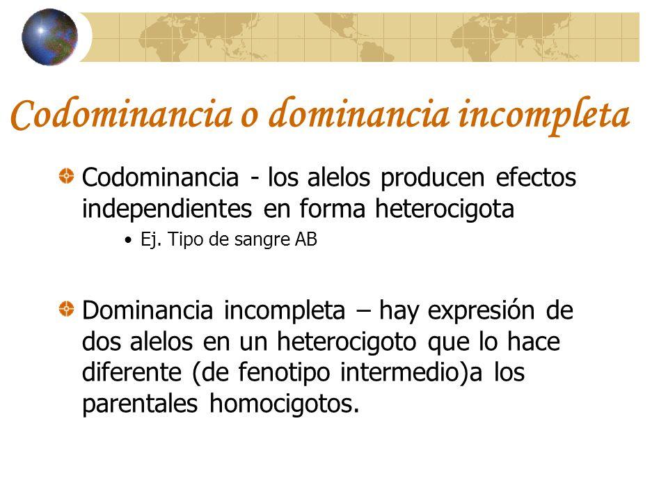 Codominancia o dominancia incompleta Codominancia - los alelos producen efectos independientes en forma heterocigota Ej. Tipo de sangre AB Dominancia