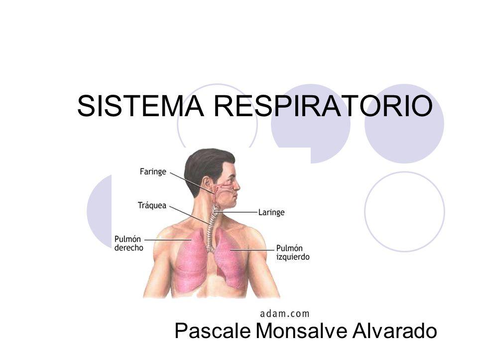 SISTEMA RESPIRATORIO Pascale Monsalve Alvarado