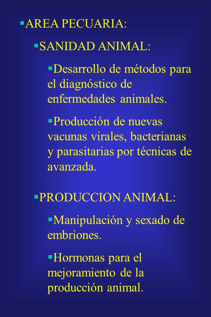 AREA AGRICOLA: Diagnóstico de fitopatógenos en plantas de interés económico. Desarrollo de agentes de control biológico y plantas. Desarrollo de plant