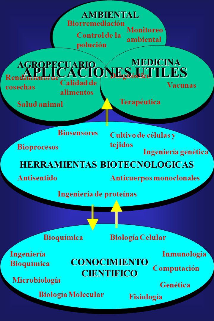 CONOCIMIENTO CIENTIFICO Bioquímica Ingeniería Bioquímica Microbiología Biología Molecular Biología Celular Computación Genética Inmunología Fisiología HERRAMIENTAS BIOTECNOLOGICAS Biosensores Antisentido Bioprocesos Ingeniería de proteínas Anticuerpos monoclonales Cultivo de células y tejidos Ingeniería genética MEDICINA AMBIENTAL AGROPECUARIO Rendimiento de cosechas Salud animal Calidad de alimentos Diagnóstico Vacunas Terapéutica Biorremediación Monitoreo ambiental Control de la polución APLICACIONES UTILES