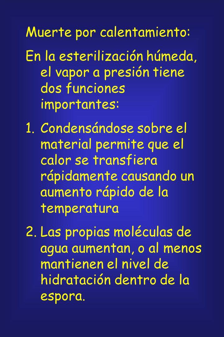 Las esporas bacterianas resisten el calor (termófilas: 200 kPa a 134 o C, 1-10 min, vapor de agua o calor seco a 180 o C, 15 min) y, algunas, las alta