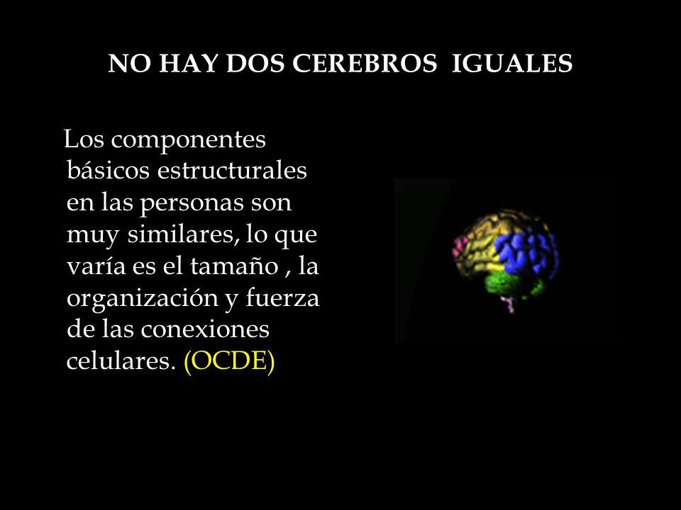 NO HAY DOS CEREBROS IGUALES Los componentes básicos estructurales en las personas son muy similares, lo que varía es el tamaño, la organización y fuer