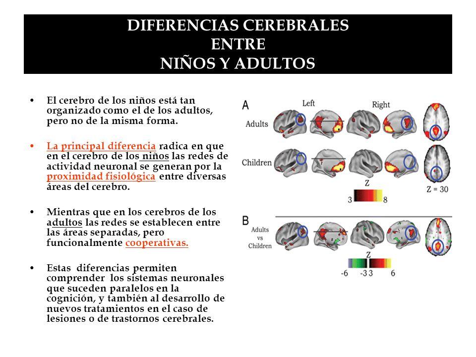 DIFERENCIAS CEREBRALES ENTRE NIÑOS Y ADULTOS El cerebro de los niños está tan organizado como el de los adultos, pero no de la misma forma. La princip