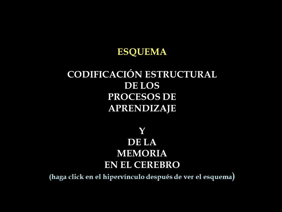 ESQUEMA CODIFICACIÓN ESTRUCTURAL DE LOS PROCESOS DE APRENDIZAJE Y DE LA MEMORIA EN EL CEREBRO (haga click en el hipervínculo después de ver el esquema