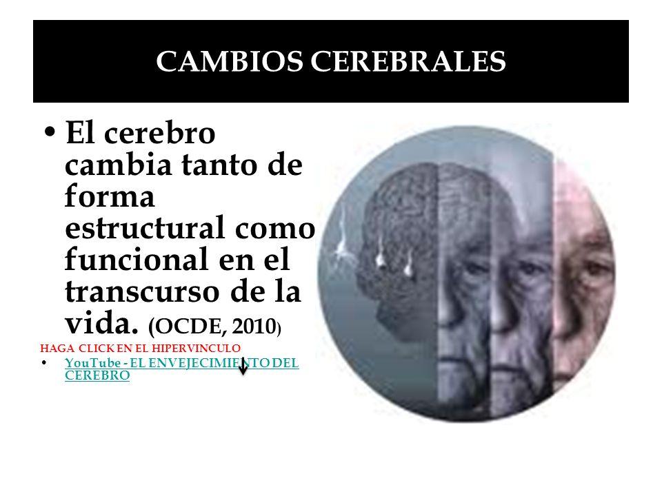 CAMBIOS CEREBRALES El cerebro cambia tanto de forma estructural como funcional en el transcurso de la vida. (OCDE, 2010 ) HAGA CLICK EN EL HIPERVINCUL