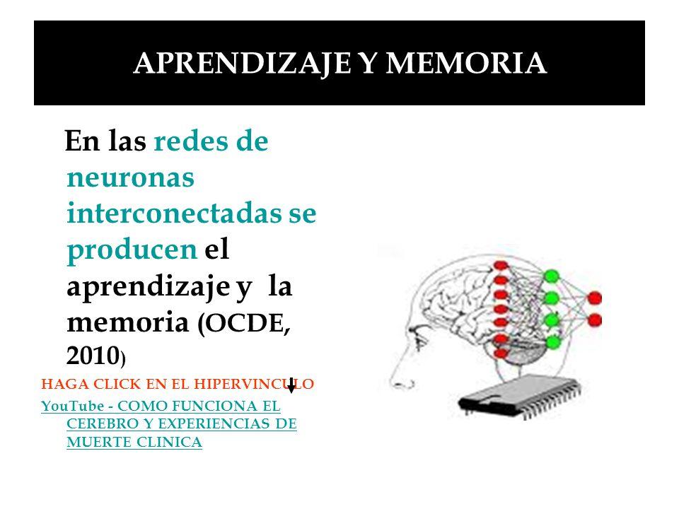 APRENDIZAJE Y MEMORIA En las redes de neuronas interconectadas se producen el aprendizaje y la memoria (OCDE, 2010 ) HAGA CLICK EN EL HIPERVINCULO You