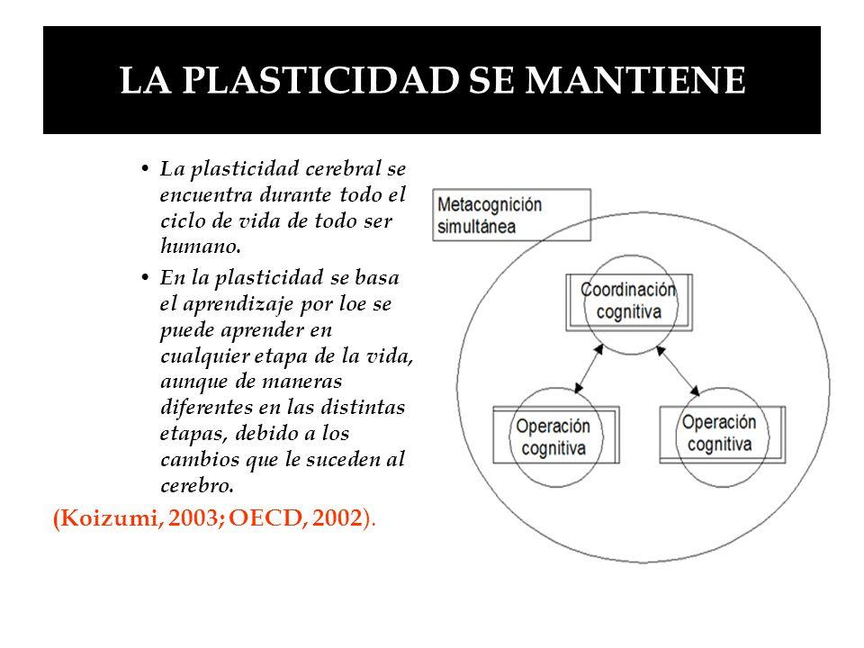 LA PLASTICIDAD SE MANTIENE La plasticidad cerebral se encuentra durante todo el ciclo de vida de todo ser humano. En la plasticidad se basa el aprendi