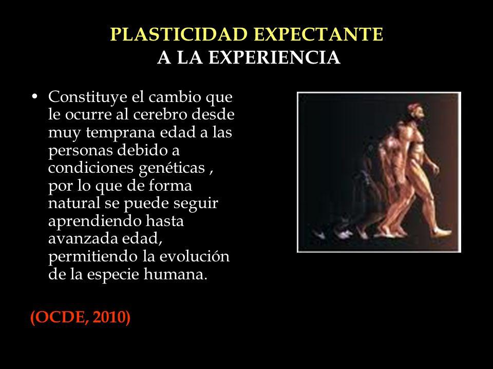 PLASTICIDAD EXPECTANTE A LA EXPERIENCIA Constituye el cambio que le ocurre al cerebro desde muy temprana edad a las personas debido a condiciones gené
