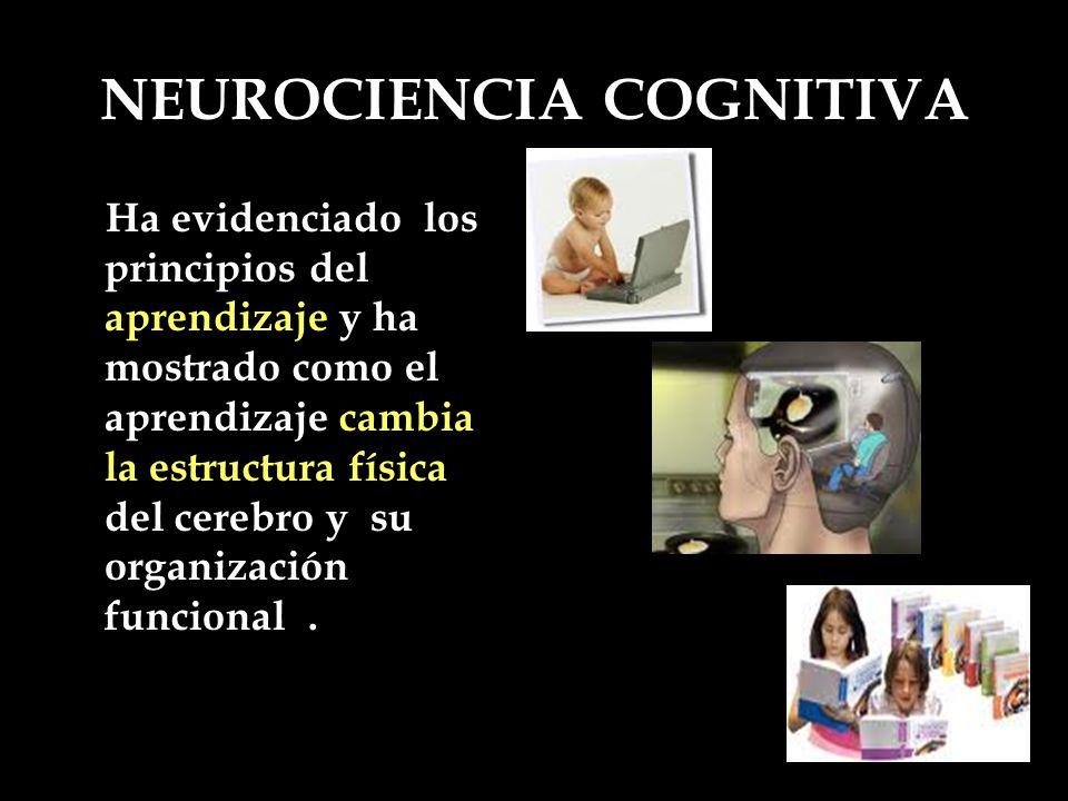 NEUROCIENCIA COGNITIVA Ha evidenciado los principios del aprendizaje y ha mostrado como el aprendizaje cambia la estructura física del cerebro y su or