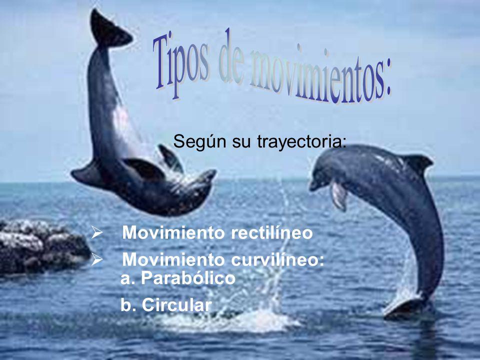 Movimiento rectilíneo Movimiento curvilíneo: a. Parabólico b. Circular Según su trayectoria: