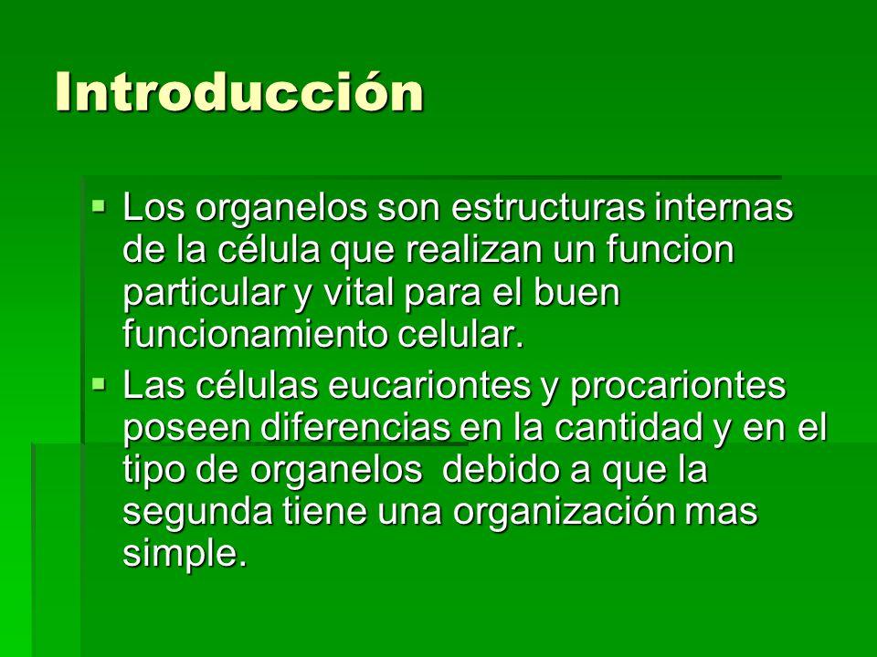 Introducción Los organelos son estructuras internas de la célula que realizan un funcion particular y vital para el buen funcionamiento celular. Los o