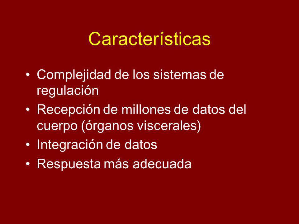 Características Complejidad de los sistemas de regulación Recepción de millones de datos del cuerpo (órganos viscerales) Integración de datos Respuesta más adecuada