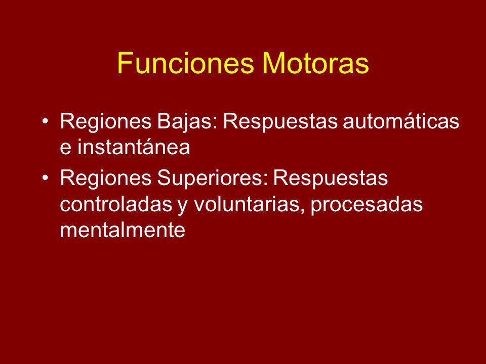 Funciones Motoras Regiones Bajas: Respuestas automáticas e instantánea Regiones Superiores: Respuestas controladas y voluntarias, procesadas mentalmen