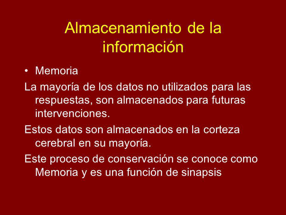 Almacenamiento de la información Memoria La mayoría de los datos no utilizados para las respuestas, son almacenados para futuras intervenciones. Estos