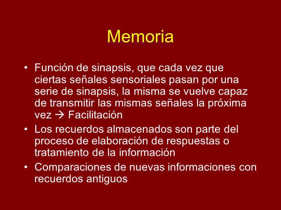 Memoria Función de sinapsis, que cada vez que ciertas señales sensoriales pasan por una serie de sinapsis, la misma se vuelve capaz de transmitir las mismas señales la próxima vez Facilitación Los recuerdos almacenados son parte del proceso de elaboración de respuestas o tratamiento de la información Comparaciones de nuevas informaciones con recuerdos antiguos