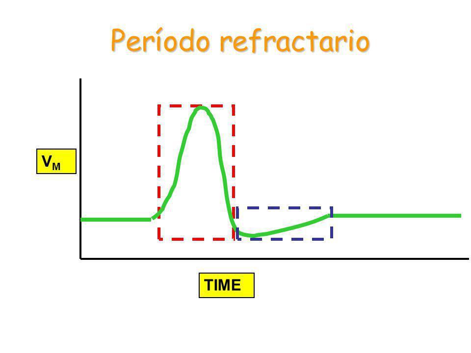 TIME VMVM Período refractario