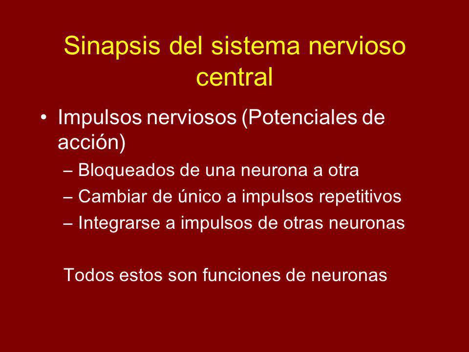 Sinapsis del sistema nervioso central Impulsos nerviosos (Potenciales de acción) –Bloqueados de una neurona a otra –Cambiar de único a impulsos repetitivos –Integrarse a impulsos de otras neuronas Todos estos son funciones de neuronas