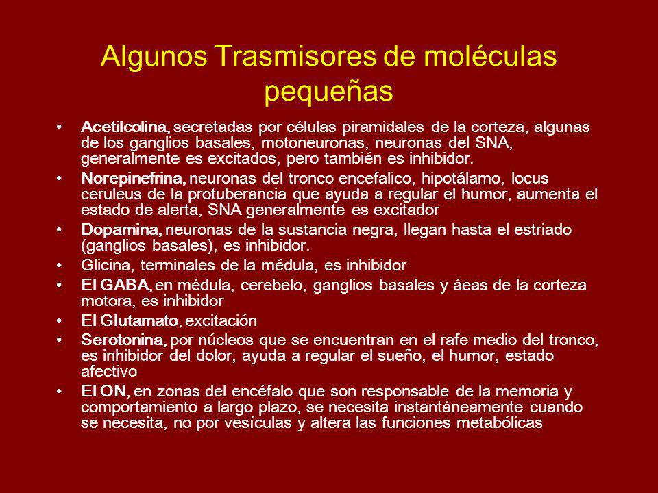 Algunos Trasmisores de moléculas pequeñas Acetilcolina, secretadas por células piramidales de la corteza, algunas de los ganglios basales, motoneuronas, neuronas del SNA, generalmente es excitados, pero también es inhibidor.