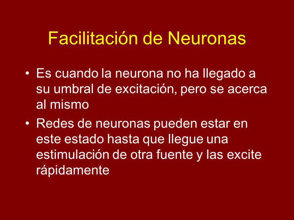 Facilitación de Neuronas Es cuando la neurona no ha llegado a su umbral de excitación, pero se acerca al mismo Redes de neuronas pueden estar en este estado hasta que llegue una estimulación de otra fuente y las excite rápidamente