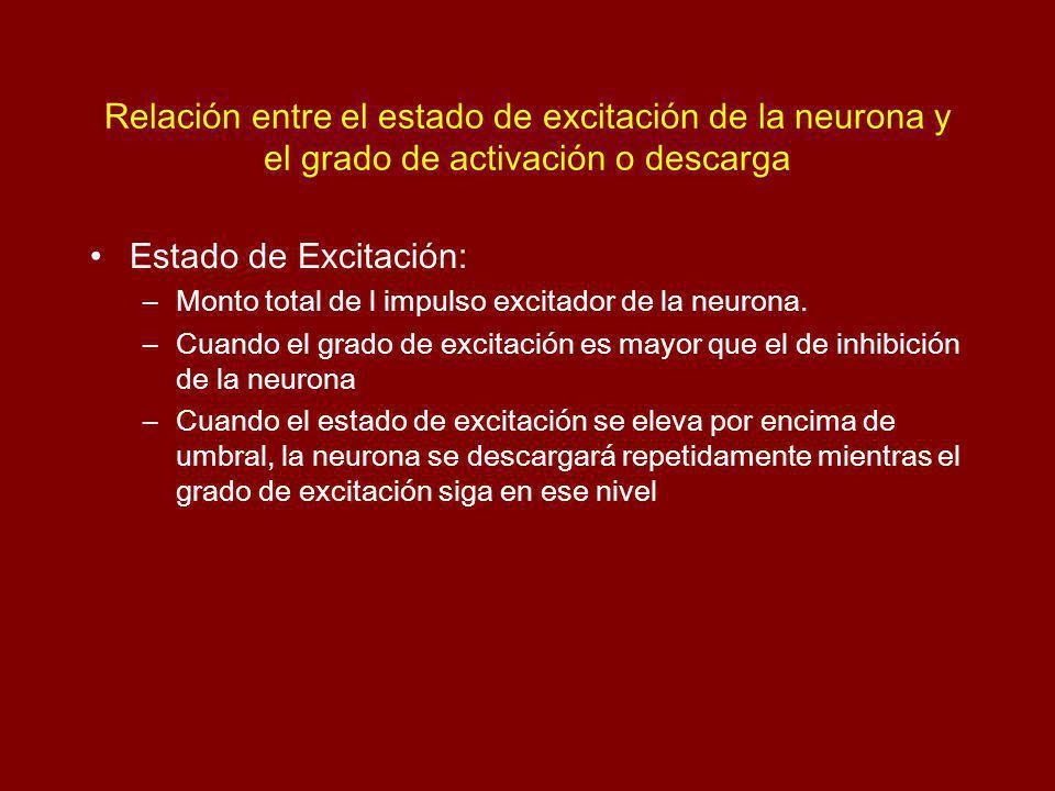 Relación entre el estado de excitación de la neurona y el grado de activación o descarga Estado de Excitación: –Monto total de l impulso excitador de