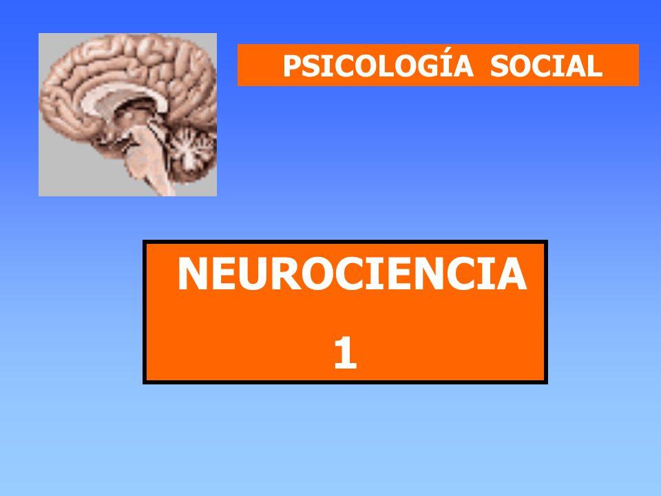 PSICOLOGÍA SOCIAL Sergio Bórquez ¿Qué es la Neurociencia.