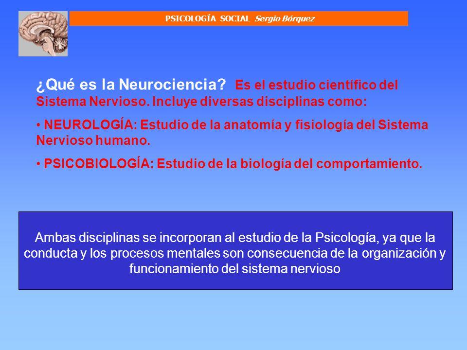 OTRAS DISCIPLINAS DE LA NEUROCIENCIA Neuroquímica Estudia las bases químicas de la actividad neuronal NeuroendocrinologíaEstudia interacciones entre sistema nervioso y el sistema endocrino u hormonal.