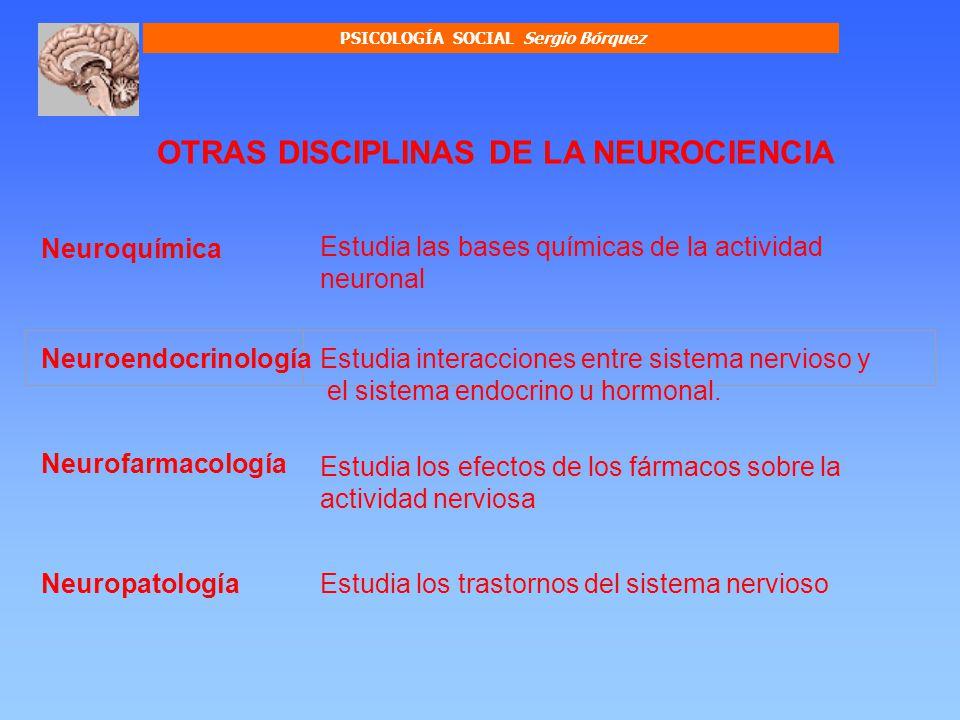 PSICOLOGÍA SOCIAL Sergio Bórquez Conforman el tejido de soporte nervioso, y reciben también el nombre de glías.