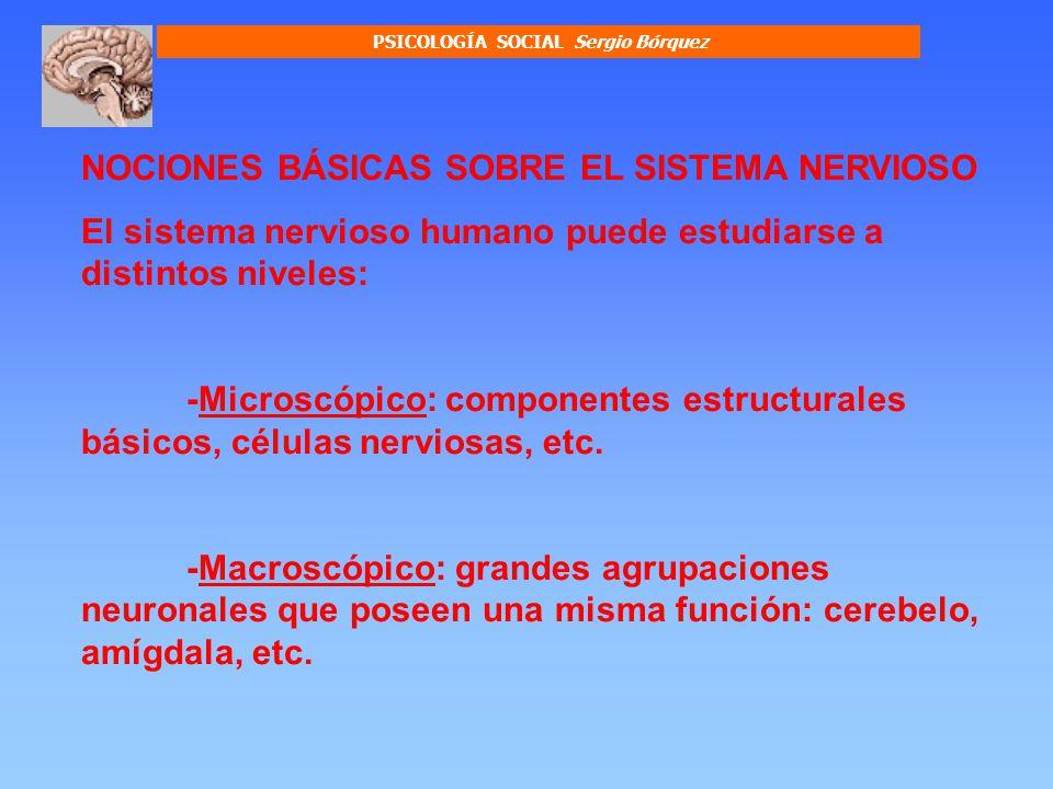 PSICOLOGÍA SOCIAL Sergio Bórquez Capa que recubre los axones para impedir la fuga eléctrica de la información.