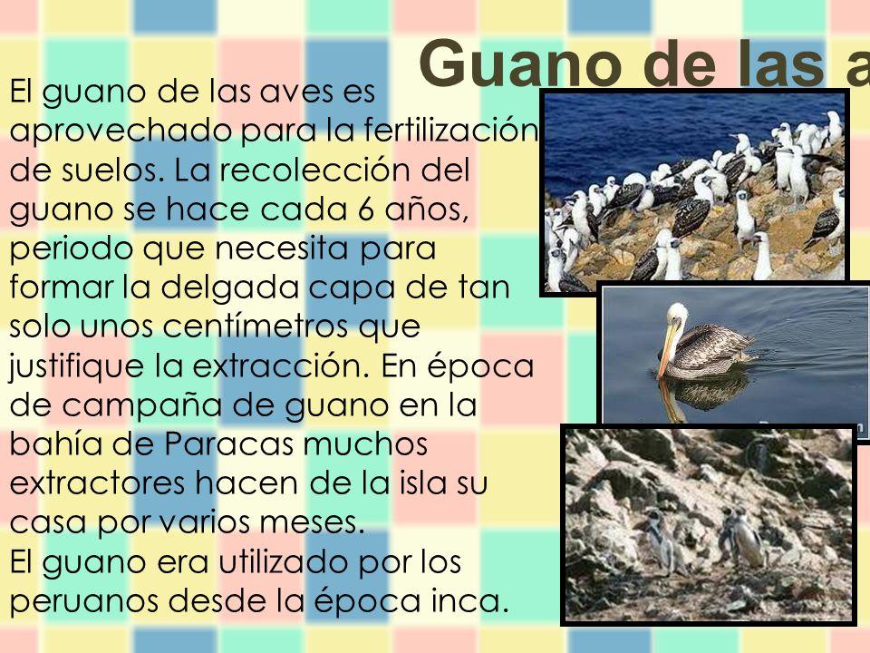 El guano de las aves es aprovechado para la fertilización de suelos.